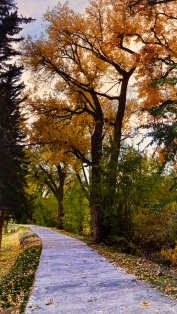 city park in fall
