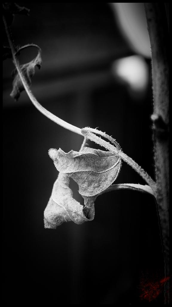 autumn remains