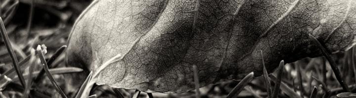 autumnleaves 1 (1)
