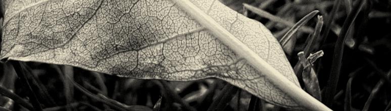 autumnleaves 2 (1)