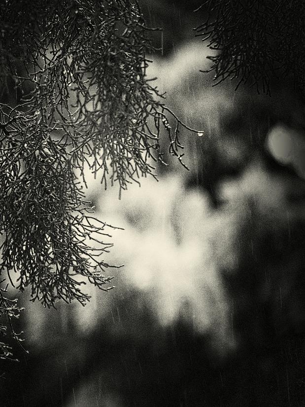 raindrops (1)