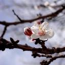 Triumph...Spring's Awakening