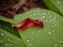 as long rain falls