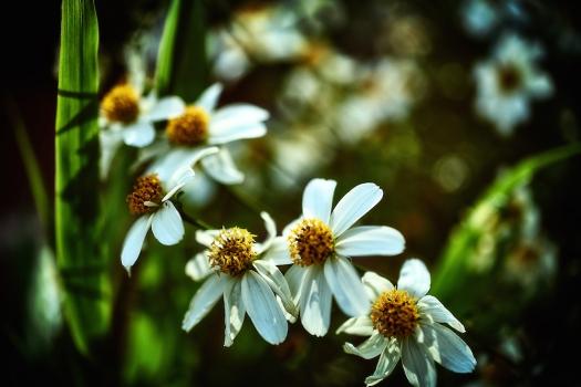 flowerbringer