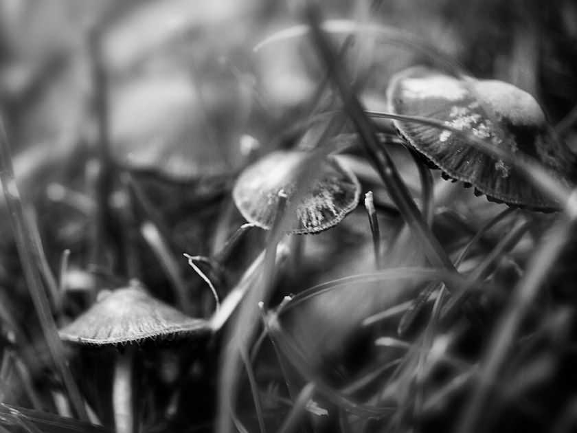 after the summer rain...a village of mushrooms