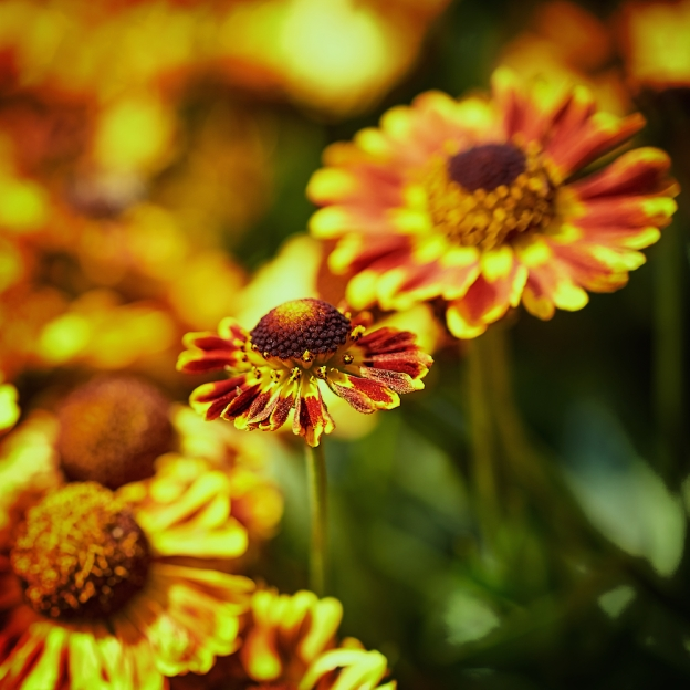 blossomviewing 1