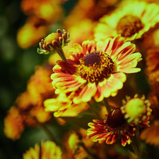 blossomviewing 2