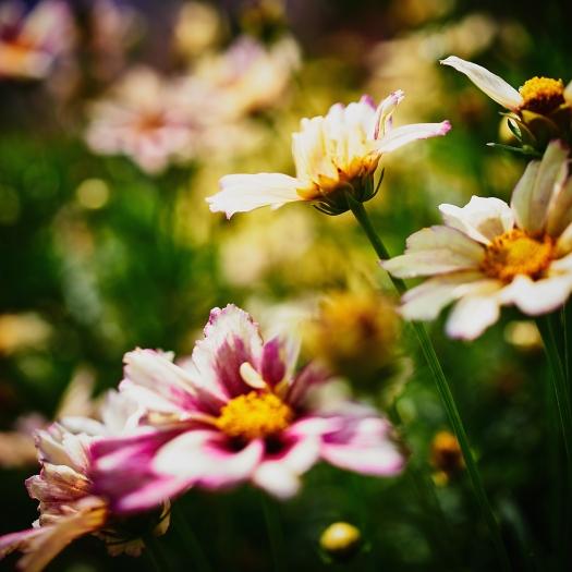 brendakofford_blossomviewing1x