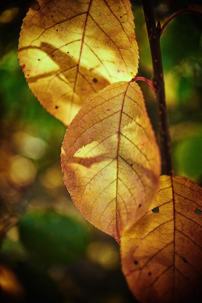 autumn (1).jpg