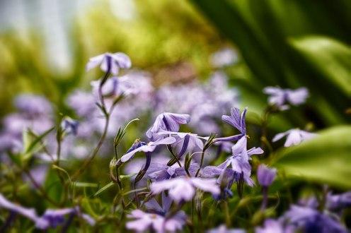 brendakofford_flowers
