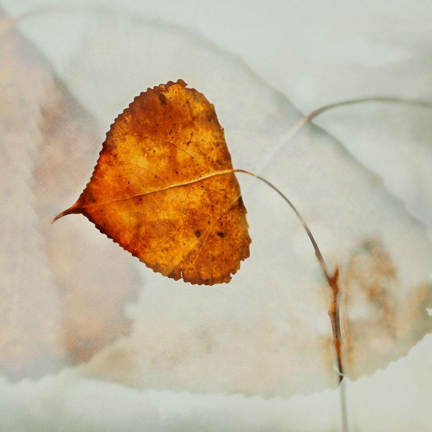 leafmultiexpf