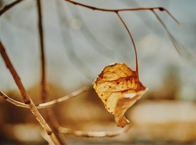 wintersleaf