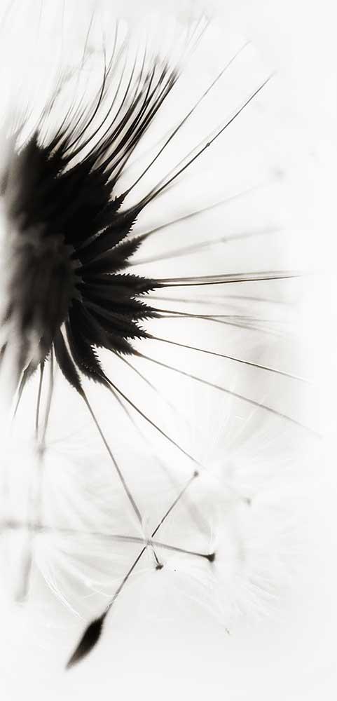 dandelionprojectink