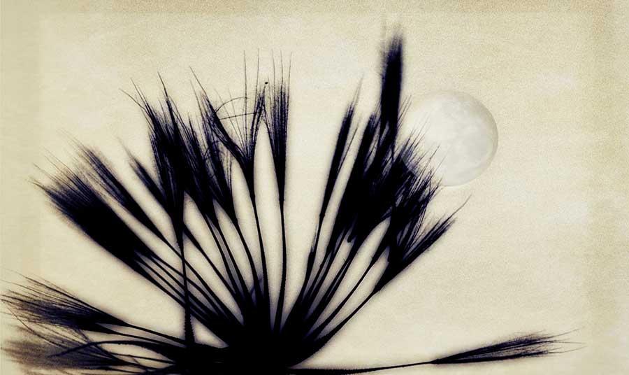 ricepaper2web