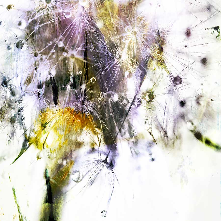 dandelionproject_tears82617bweb