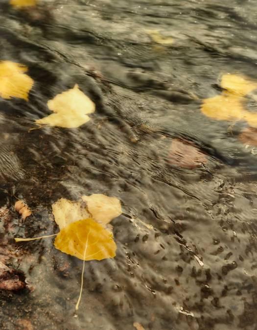 autumn102417web