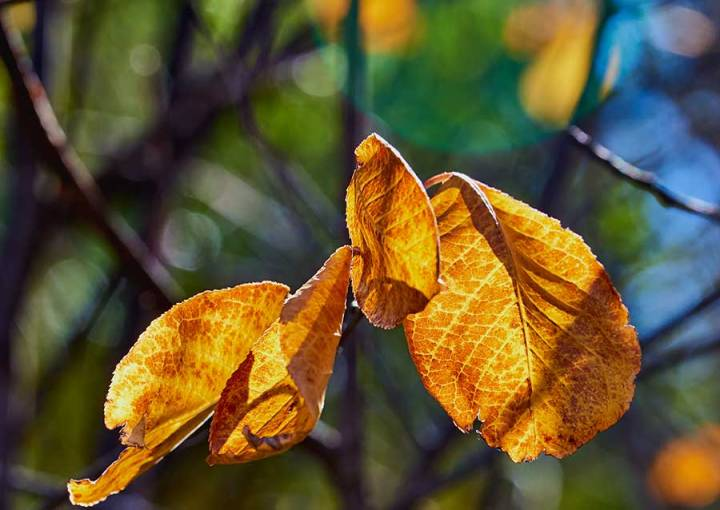 autumn11217web