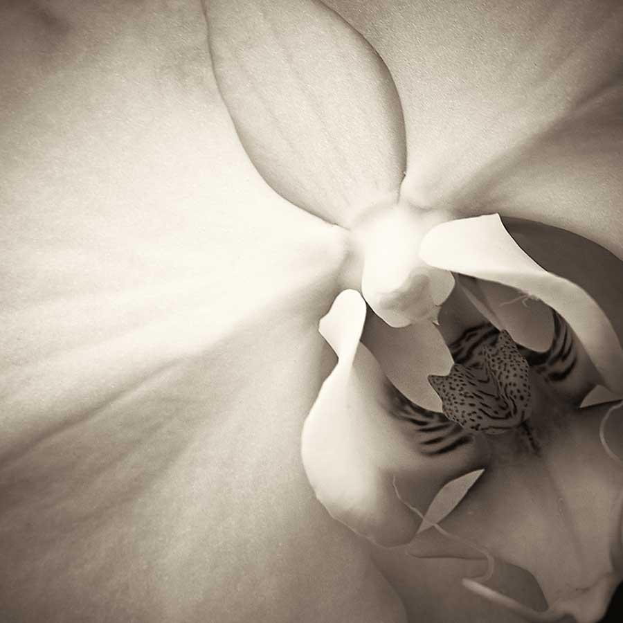 orchidweb