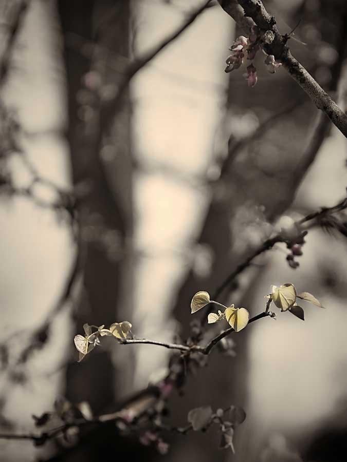 brendakofford_spring'sawakening1aweb