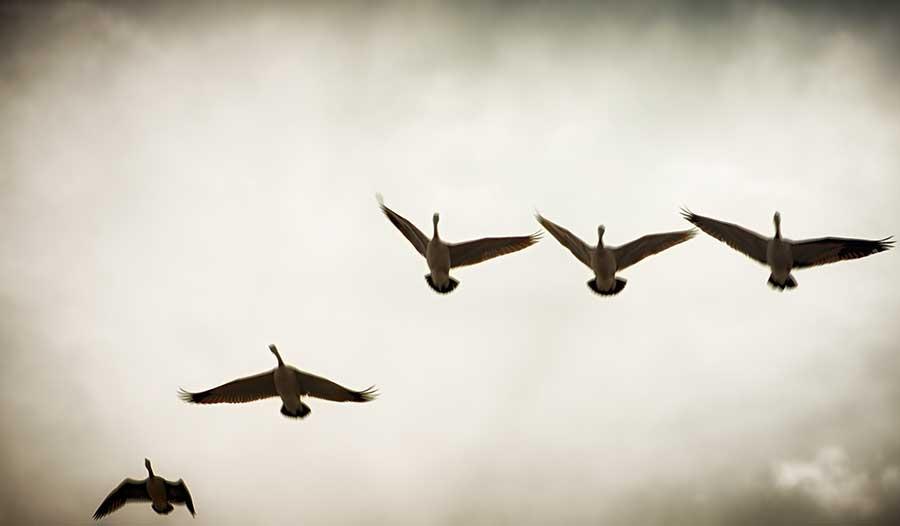 simplicitybirds-2web