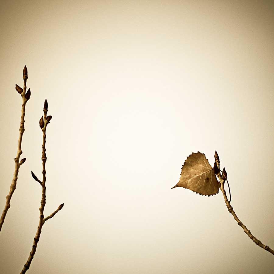 winterleafweb