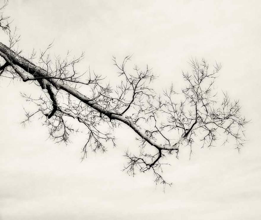 branchweb