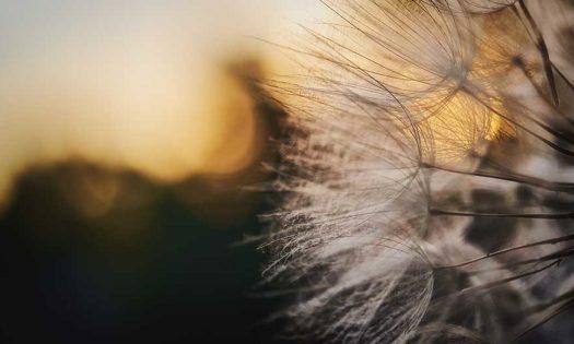 cropped-dandelionproject13118web.jpg