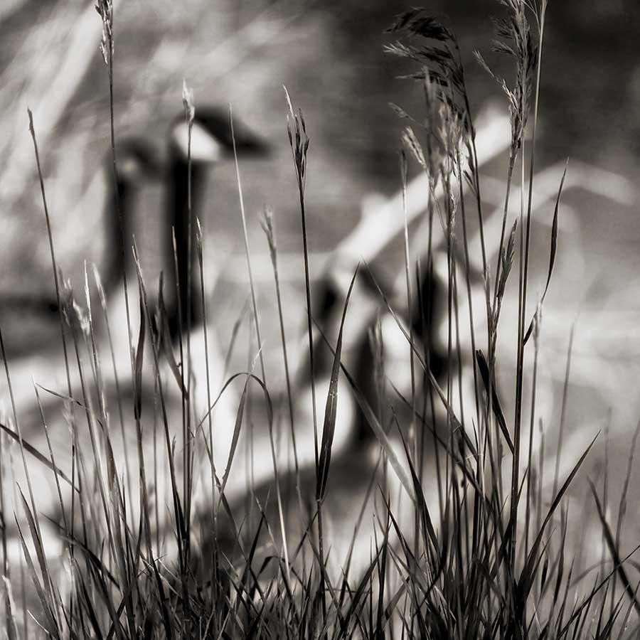 thephotographer-1web