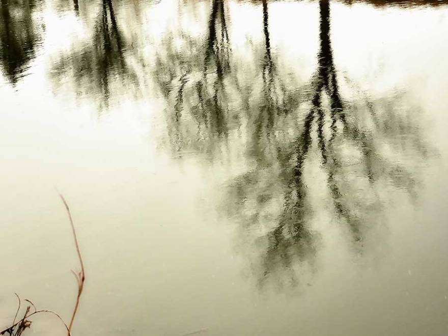 brendakofford_reflectionsweb