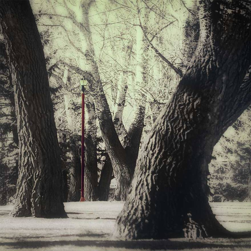 treessaigoweb