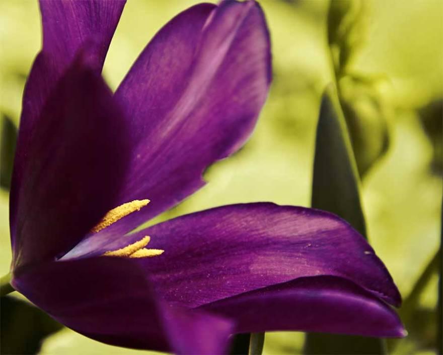 blossom32web