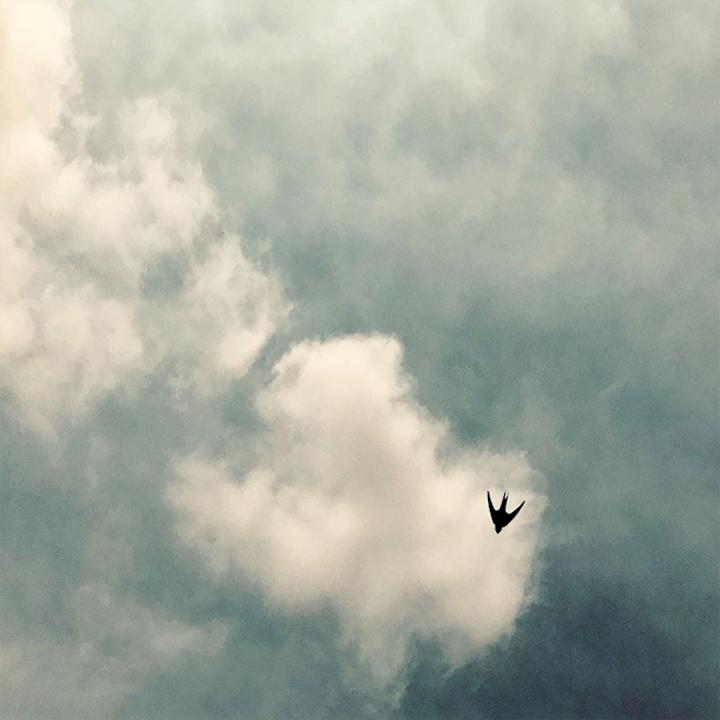 solitarybirdweb