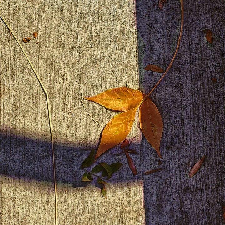 contemplativephoto-15web83118