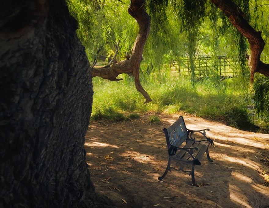 contemplativephoto-bench