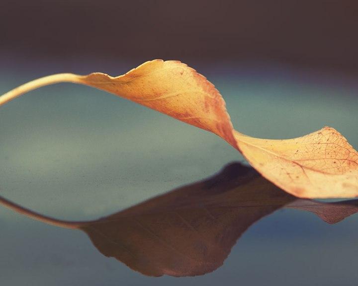 leafstudy111218web